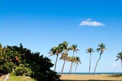 пальмы hibiscus bush пляжа стоковые изображения rf