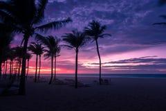 Пальмы silhouette на заходе солнца на тропическом острове Стоковые Фотографии RF