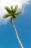 Пальм на пляже Стоковая Фотография RF