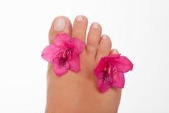 пальцы ноги Стоковое Изображение