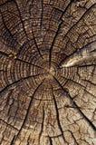 палят древесина Стоковое Фото