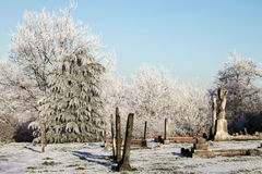 Памяти зимы 1910 Стоковые Фото