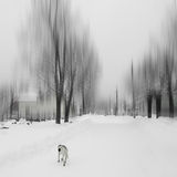 Памяти зимы Стоковые Фото