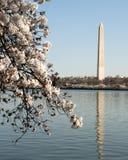 Памятник Вашингтона весной Стоковое фото RF