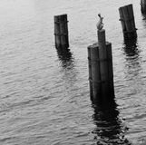 Памятник зайца Стоковое фото RF