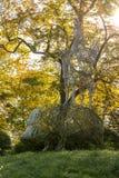 Памятник к оставшийся в живых животных войны в зоопарке Kaliningr Стоковое Фото