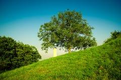 Памятник рядом с деревом Стоковая Фотография RF
