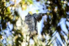 памятник barcelona columbus стоковая фотография rf