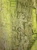 Память инициалов высекая в зеленой расшиве на старом дереве Стоковое Изображение RF