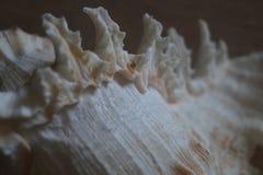 память seashell от моря стоковые фото