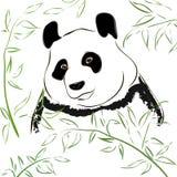 панда медведя Стоковое Изображение RF