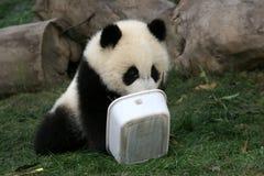 панда Стоковое Изображение