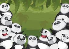 панды джунглей предпосылки Стоковое Фото