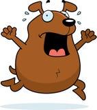 паника собаки Стоковая Фотография