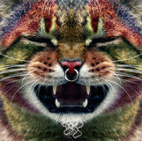 панк кота Стоковая Фотография