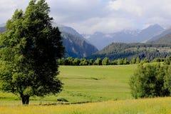 Панорама ландшафта горы Стоковая Фотография
