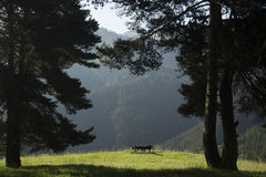 Панорама ландшафта горы Стоковые Фото