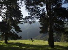 Панорама ландшафта горы Стоковое Изображение RF