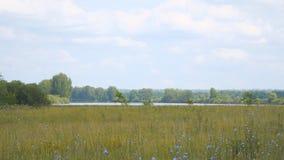 Панорама большого луга и озера перед лесом сток-видео