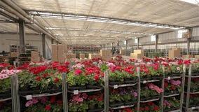 Панорама большого склада с зацветая цветками, потока операций в складе большого современного парника сток-видео