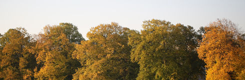 Панорама верхних частей дерева Стоковое фото RF