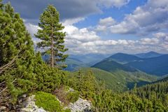 Панорама весны озера леса стоковые изображения