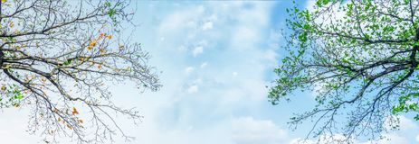 Панорама, ветви дерева разницы Стоковые Изображения