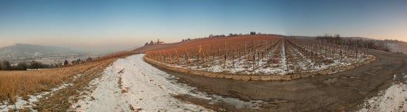Панорама виноградника в зиме Стоковые Фотографии RF