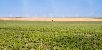 Панорама виноградника с строками и ветротурбинами виноградины eco в b стоковое изображение
