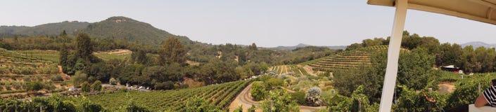 Панорама виноградника Стоковое Изображение