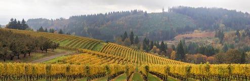 Панорама виноградников Данди Орегона сценарная Стоковая Фотография RF