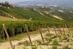 Панорама виноградников Стоковые Изображения