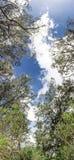 Панорама голубого неба с облаками и взгляд деревьев нижний от Вертикальный панорамный вид ветвей дерева против неба стоковое изображение