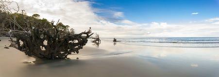 панорама 180 градусов одичалого пляжа Стоковые Фотографии RF
