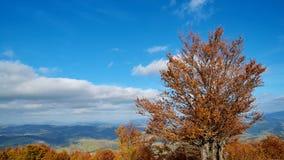 Панорама дерева с листьями желтого цвета и изумительными облаками в прикарпатских горах в осени Предпосылка ландшафта гор Стоковая Фотография RF