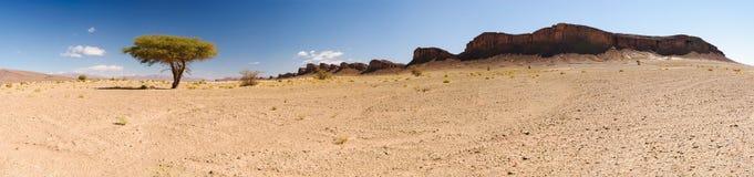 Панорама дерева и гор, Сахары, Марокко Стоковые Фотографии RF