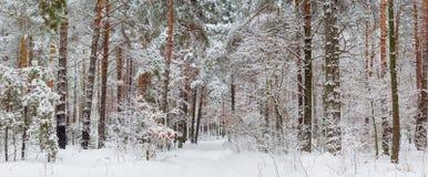 Панорама леса зимы после снежности Стоковые Изображения RF