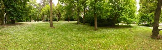 Панорама леса Стоковое Фото