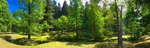 Панорама леса Стоковые Фотографии RF