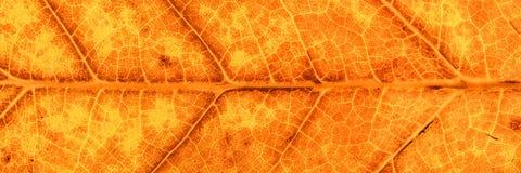 Панорама желтых и коричневых лист осени стоковые изображения