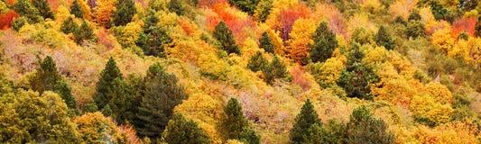 Панорама желтых и оранжевых деревьев в осени в лесе Стоковое фото RF