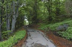 Панорама живописного леса стоковое фото