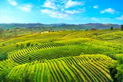 Панорама захода солнца виноградников Langhe, Пьемонт, Италия Европа стоковая фотография rf