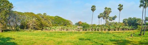 Панорама зеленого луга, Ava, Мьянмы стоковая фотография