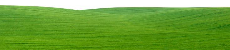 панорама зеленого цвета поля выреза Стоковая Фотография RF