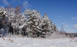 Панорама зимы древесины Стоковое Изображение RF