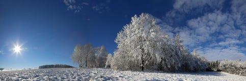 Панорама зимы стоковая фотография