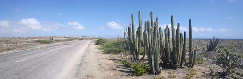 Панорама кактусов Стоковое Фото