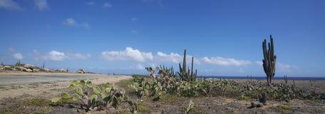 Панорама кактусов Стоковые Изображения