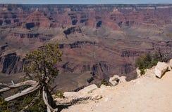 панорама каньона грандиозная Стоковое фото RF